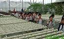 植物克隆科普基地探寻中草药活动方案